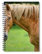 Portrait Of A Horse Spiral Notebook