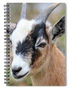 Portrait Of A Pygmy Spiral Notebook