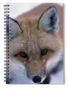 Portrait Of Adult Red Fox Spiral Notebook
