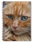 Portrait Of An Orange Kitty Spiral Notebook