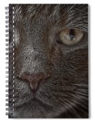 Portrait Of Cutio The Cat Spiral Notebook