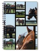 Posers Spiral Notebook