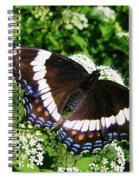 Posing Butterfly Spiral Notebook