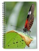 Postman Butterfly Spiral Notebook