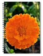 Pot Marigold  Spiral Notebook