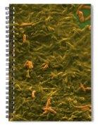 Potable Water Biofilm Spiral Notebook