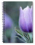 Prairie Crocus Anemone Patens Spiral Notebook