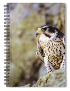 Prairie Falcon On Rock Ledge Spiral Notebook