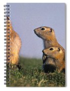 Prarie Dog Family Spiral Notebook