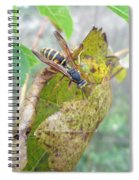 Predatory Wasp Hunts Spider Spiral Notebook