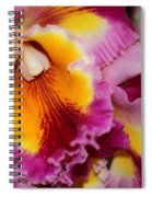 Pretty And Colorful Orchids Spiral Notebook