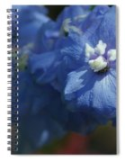 Pretty Blue Delphinia Spiral Notebook