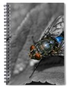 Pretty Fly For A Fly Guy Spiral Notebook