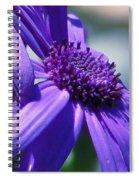 Pretty In Pericallis Spiral Notebook