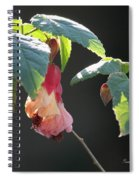 Pretty Ladies In Frilly Gowns II Spiral Notebook