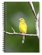 Pretty Little Lady Spiral Notebook
