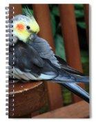 Pretty Polly Spiral Notebook