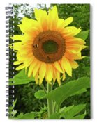 Pretty Sunflower  Spiral Notebook