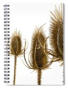 Prickly Teasels On White Spiral Notebook