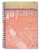Primate Baboon Finger Pad Spiral Notebook