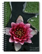 Primo Waterlily Spiral Notebook