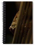 Prisoner Of The Vortex Spiral Notebook