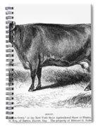 Prize Devon Cow, 1855 Spiral Notebook