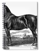Prize Horse, 1857 Spiral Notebook