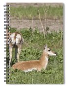 Pronghorn Antelope With Young Spiral Notebook