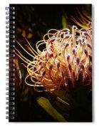 Protea Flower 10 Spiral Notebook