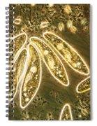 Protozoa, Paramecium, Lm Spiral Notebook