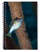 Puffer Profile Spiral Notebook