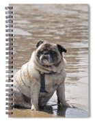 Pug Can't Be Budged Spiral Notebook