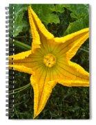 Pumpkin Flower 1 Spiral Notebook
