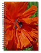 Pumpkin Poppy Spiral Notebook