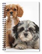 Puppies Spiral Notebook