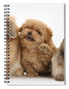 Puppy And Rabbits Spiral Notebook