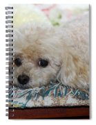 Puppy Dog Eyes Spiral Notebook