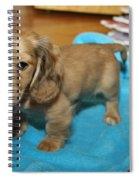 Puppy On Blue Blanket Spiral Notebook