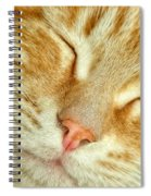 Pure Bliss Spiral Notebook