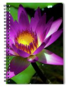 Purple And Gold Three Spiral Notebook
