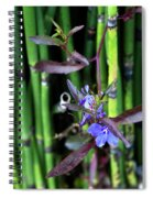 Blue Bursts From Bamboo Spiral Notebook