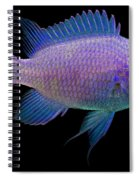 Purple Chromis Spiral Notebook