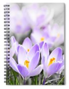 Purple Crocus Blossoms Spiral Notebook