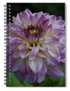 Purple Dahlia 3 Spiral Notebook