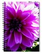 Purple Dahlia Spiral Notebook