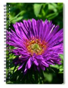 Purple Dome New England Aster Spiral Notebook