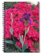 Purple Iris In Pink  Spiral Notebook