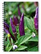 Purple Pepper Life Cycle  Spiral Notebook