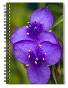 Purple Spiderwort 1 Spiral Notebook